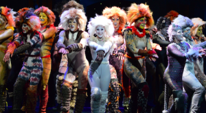 What's a Jellicle Cat?