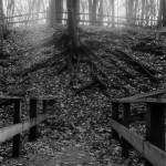 Roots (Medium Format Film)
