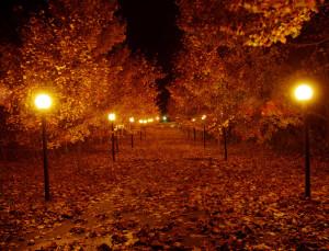 Spooky Fall Jams Playlist